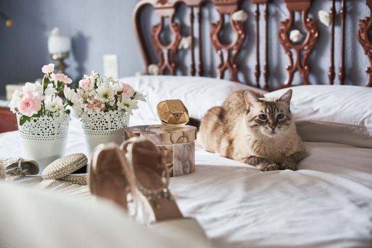 Accessori di lusso per gatti