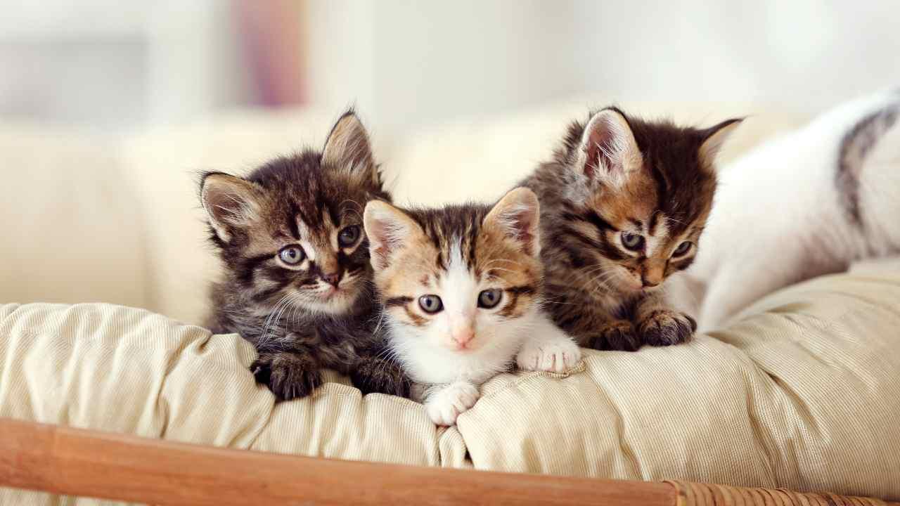 Quanti gatti ci sono in Italia?