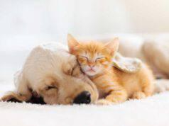 Le sanzioni per chi chiede le detrazioni fiscali per animali domestici senza dimostrarne la proprietà