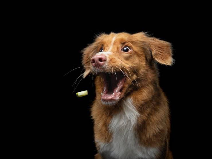 Riflessi condizionati del cane