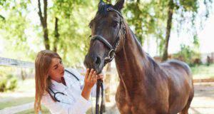 Mucose pallide nel cavallo