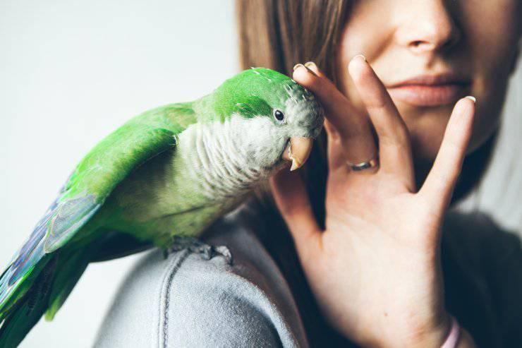 Uccello come animale domestico