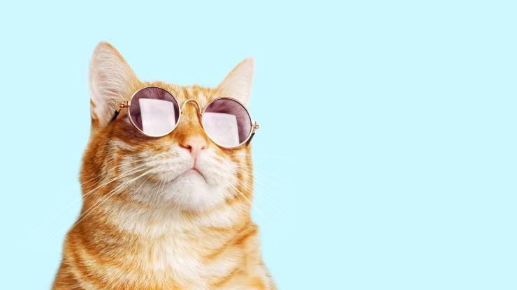 gatto spia agente segreto occhiali da sole