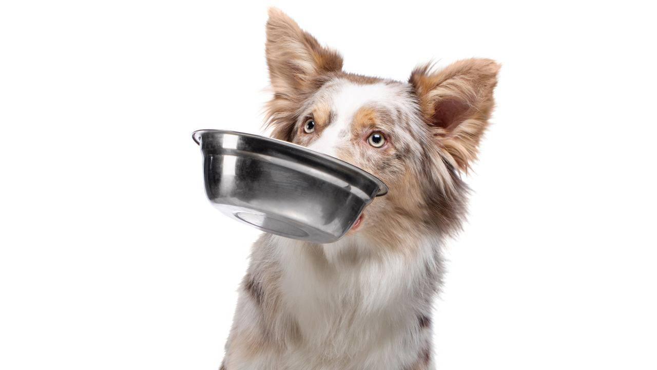 Les chiens peuvent-ils manger des câpres?