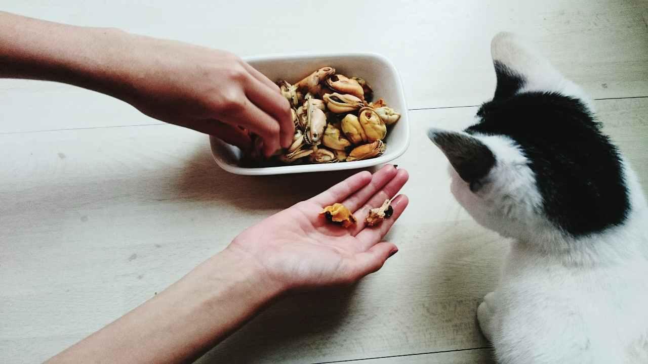 Il gatto può mangiare le cozze?