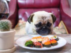 Il cane può mangiare il salmone?