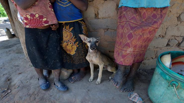 Malnutrizione nel cane