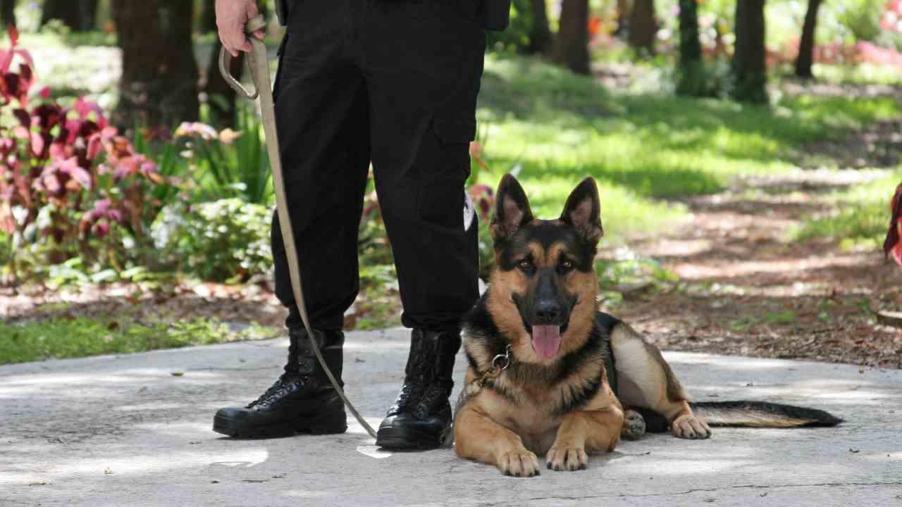Come adottare un cane poliziotto