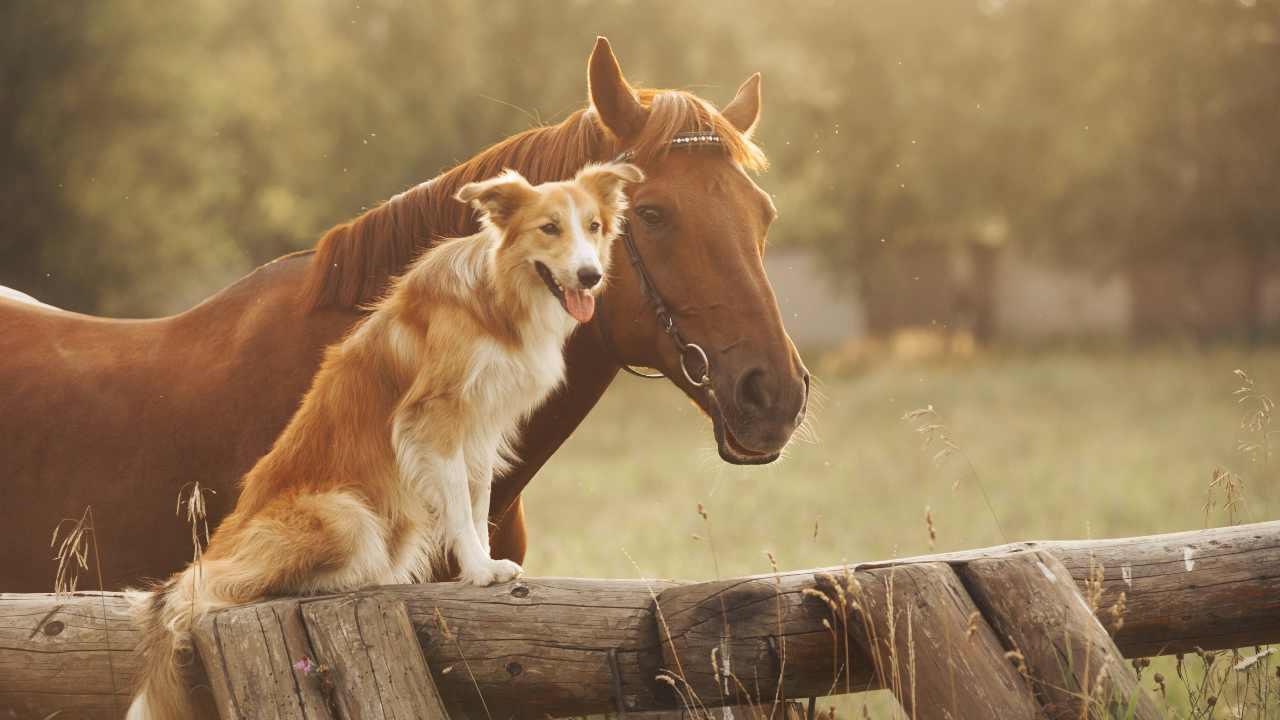 Razze di cani che vanno più d'accordo con i cavalli