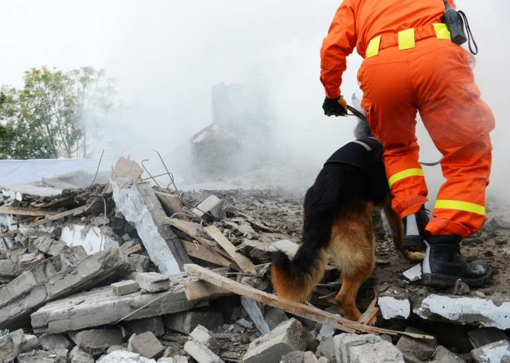 Cani da salvataggio da terremoto