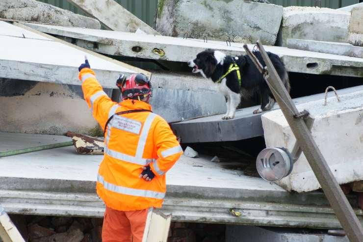 Addestramento cane da salvataggio da terremoto