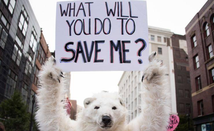 WWF Lettera Animali Video