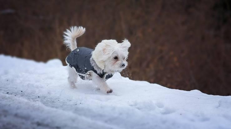 Cane al freddo