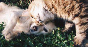 Cani e gatti Vitamina C