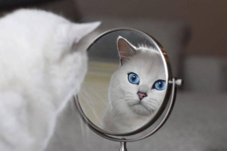 Coby allo specchio