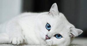 Coby occhi più belli al mondo