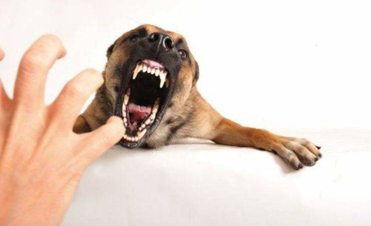 cane ringhia contro padrone