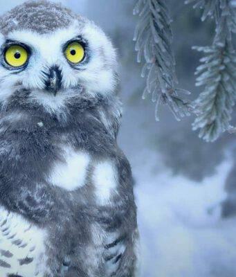 neve animali gufo