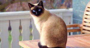 Significato colore del gatto