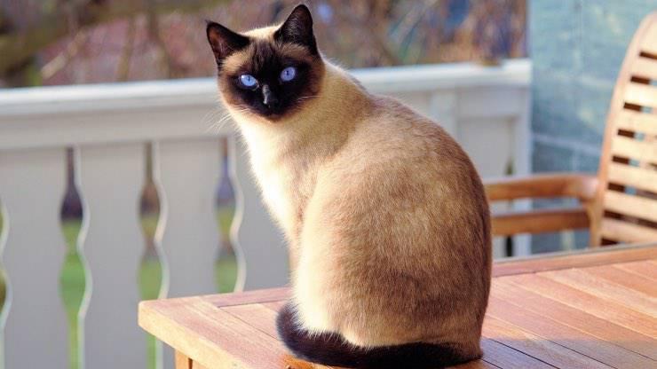 Significato del colore dei gatti