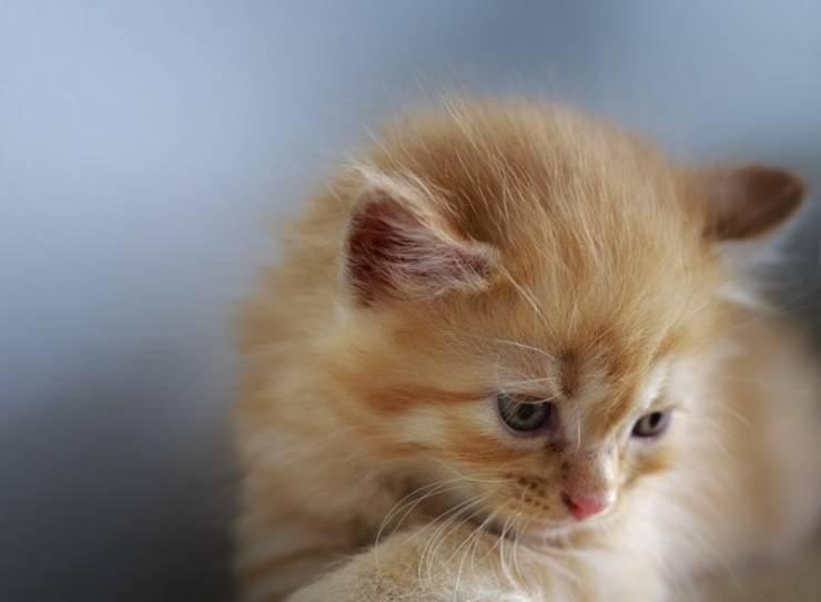 gattino aspetta amico triste malato Covid