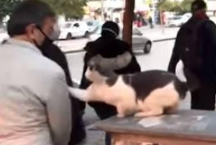 Gatto Attacca Passanti Video