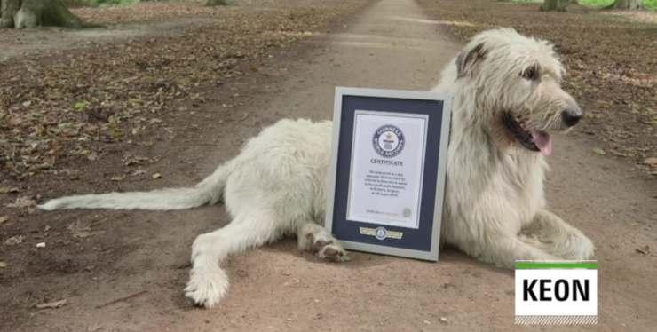 Keon cane coda più lunga