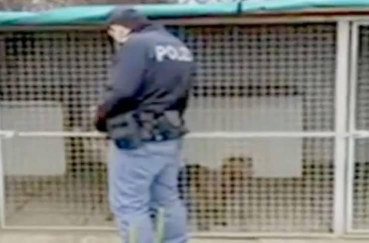 Bulldog Uomo Arrestato