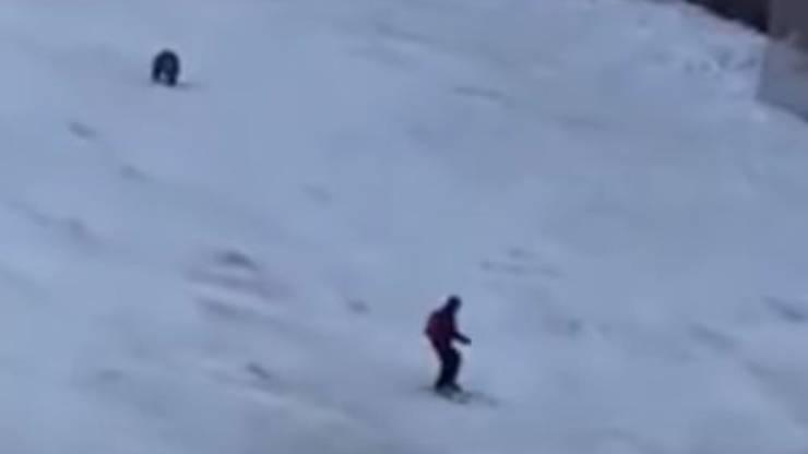 Sciatore Orso Video