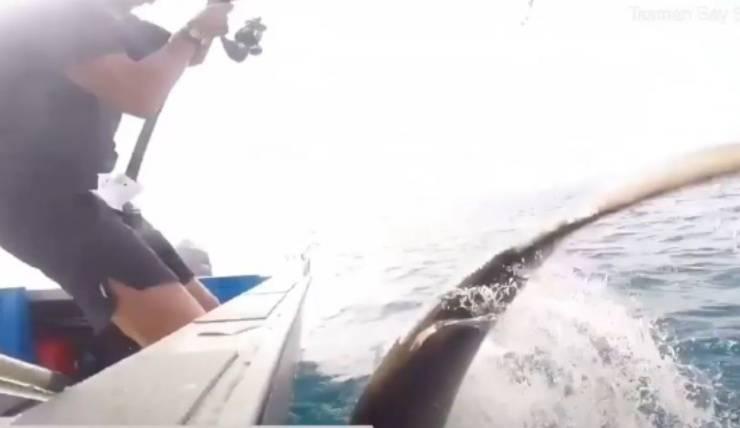 Squalo Pescatori Video