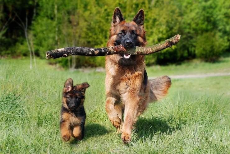 Cagna con cucciolo