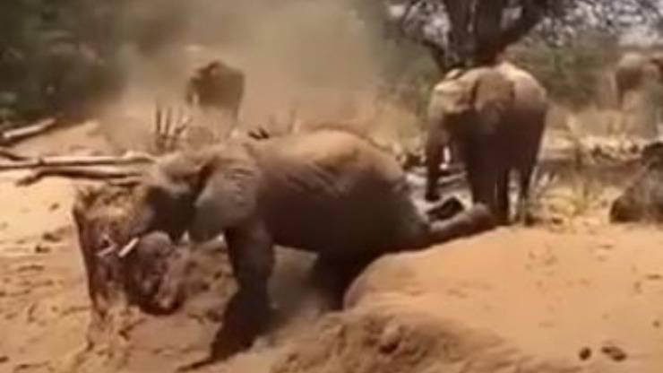Mamma Cucciolo Elefante Video
