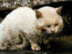 gattina abbandonata anziana ammalata