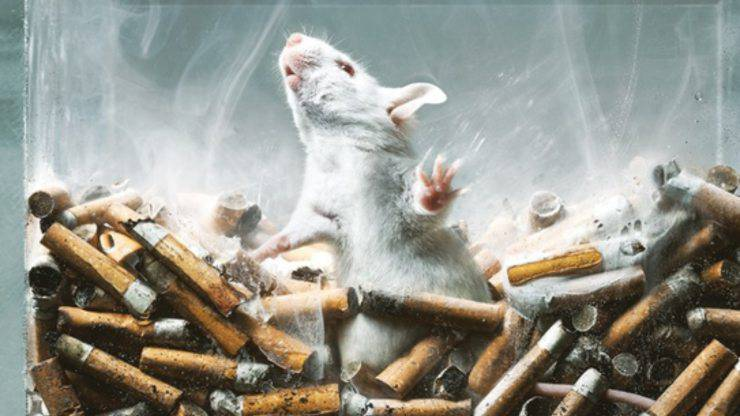 Test Animali Tabacco Alcol Droghe
