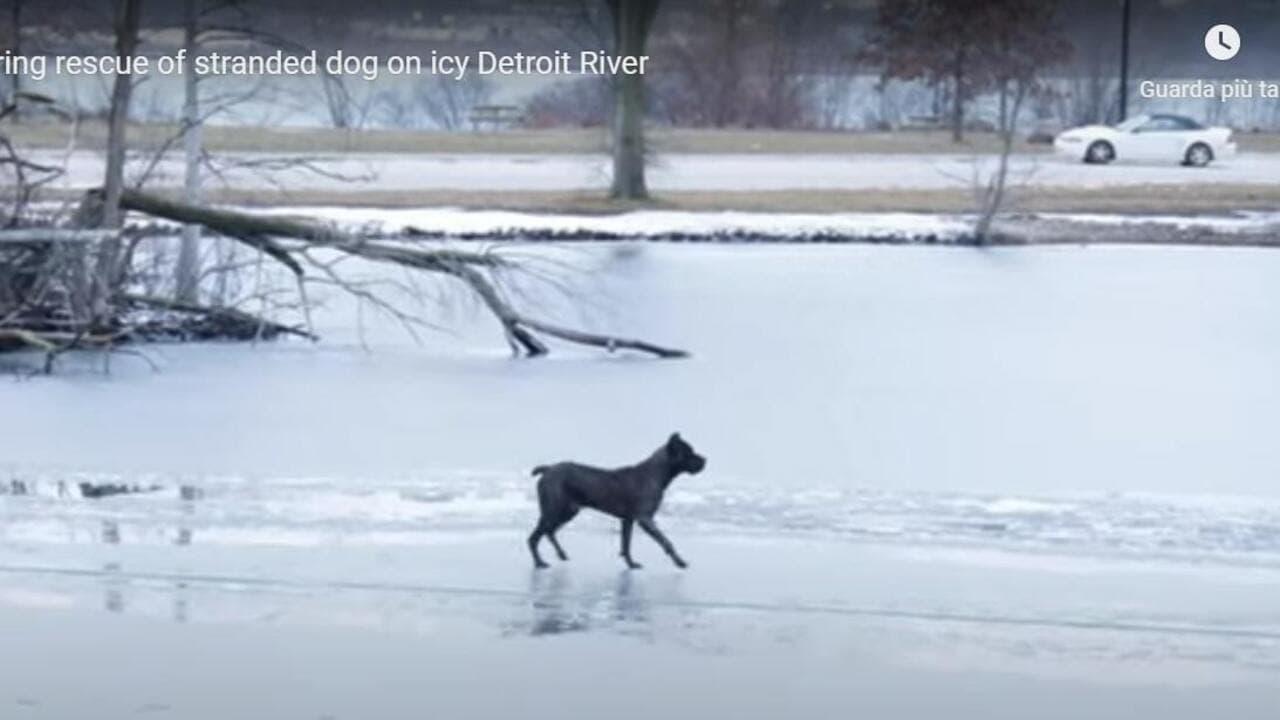 Cane intrappolato in un fiume ghiacciato