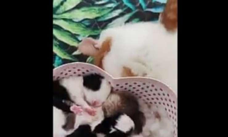 La gattina con i coniglietti (Foto video)