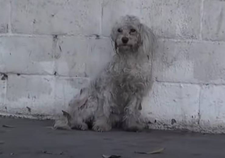 cane abbandonato gioco libretto medico