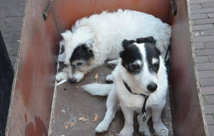 anziana povera salva 16 cagnolini abbandonati