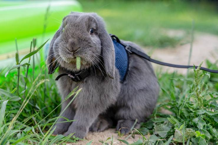accessori coniglio