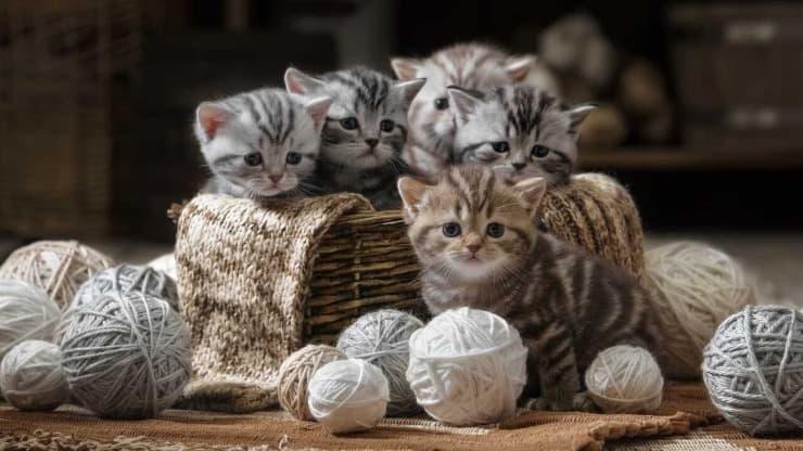 Quanti gatti ci sono al mondo?