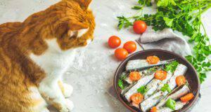 ricette alici gatto