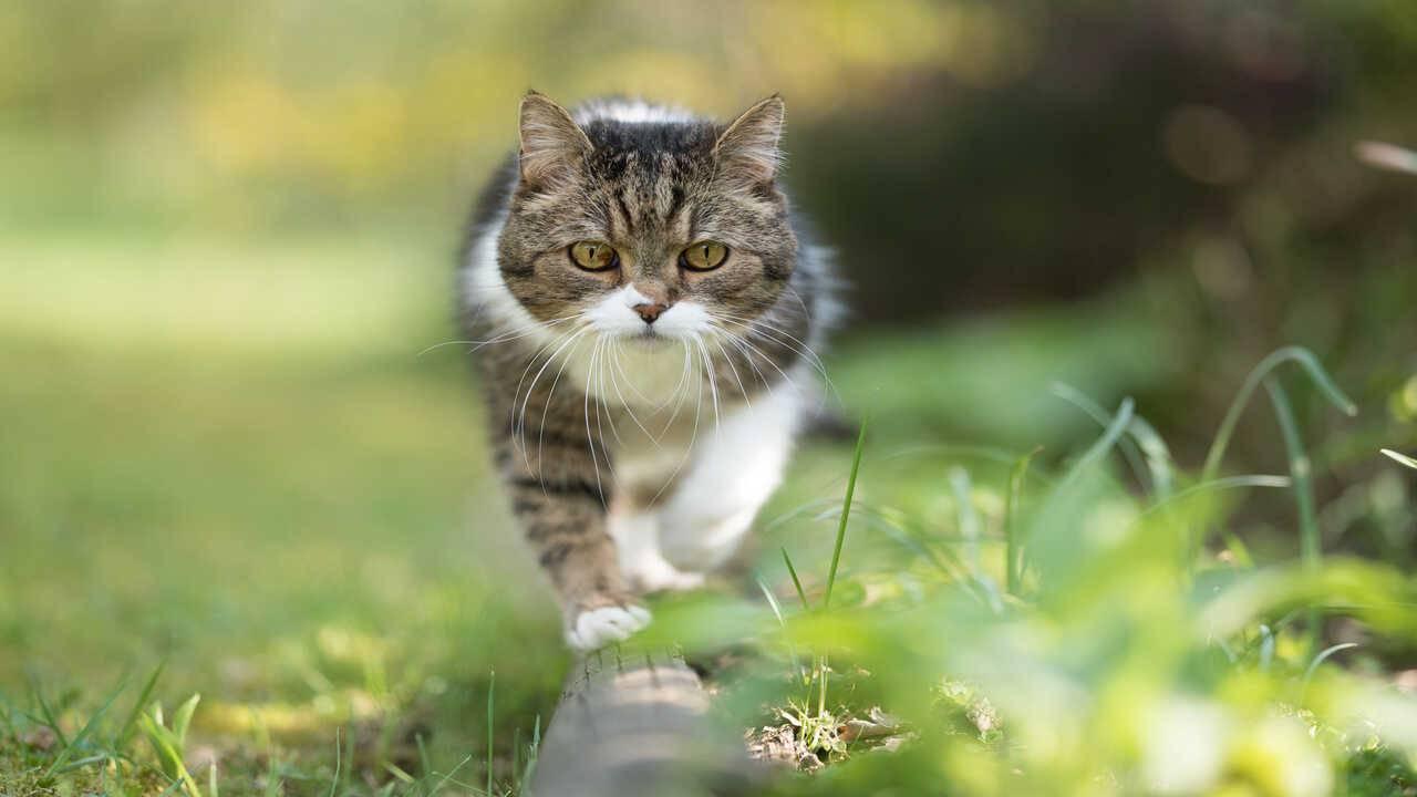 localizzatori GPS gatto