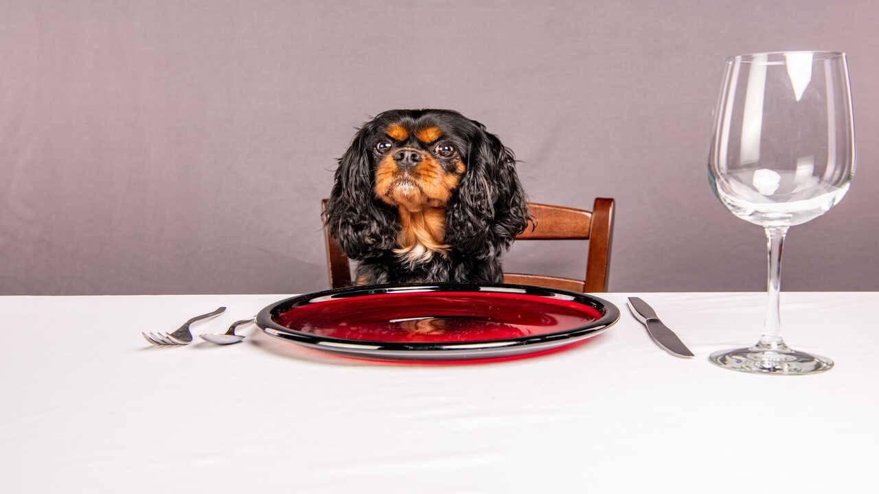 paté cani ricette