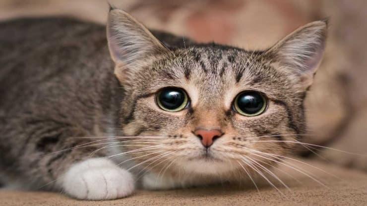 Il gatto capisce se abbiamo paura?