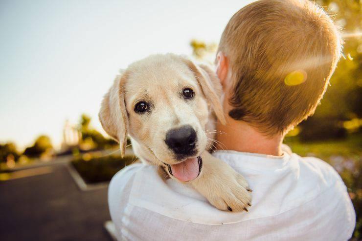 Empatia del cane col suo padrone