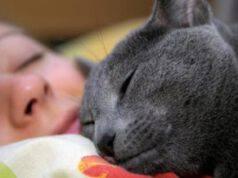 gatto dorme addosso