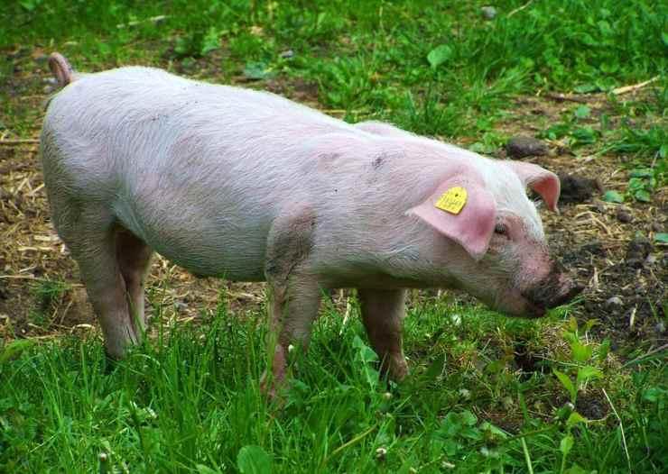 rifugio salvare animali allevamento anziani