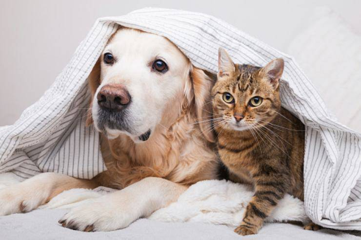 gattino guida amico cane cieco