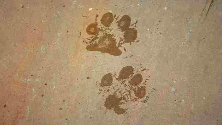 Impronte di animali (Foto Pixabay)