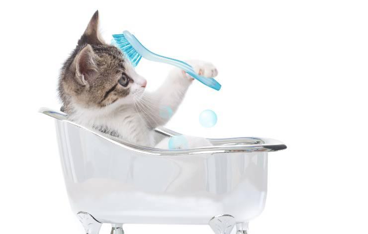 autotoelettatura gatto